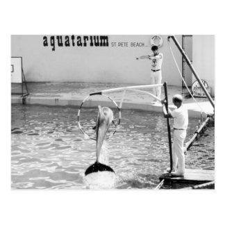 Aquatarium St. Pete Beach Florida, Dolphin Postcard