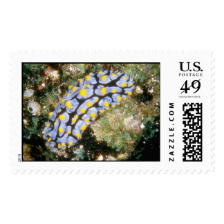 Aquatic  172 postage