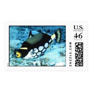Aquatic 56 stamp