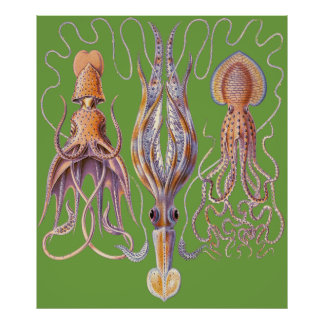 Aquatic Art  Octopuses Poster