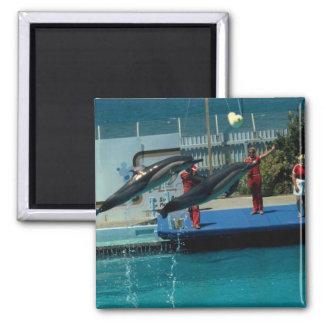 Aquatic Magnet