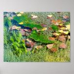 Aquatic Plants in Lincoln Park III - Color Saturat Posters