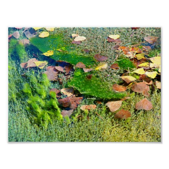 Aquatic Plants in Lincoln Park III - Color Saturat Poster