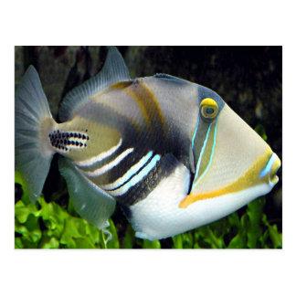 aquatic scenes trigger fish postcard