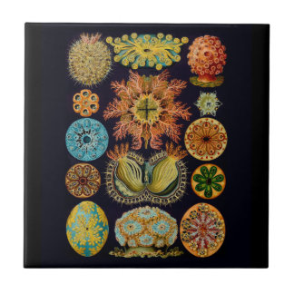 Aquatic Sealife Ernst Haeckel Ascidiae A01 Ceramic Tile