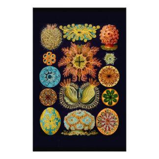 Aquatic Sealife Ernst Haeckel Ascidiae A01 Stationery