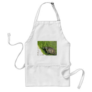 Aquatic turtle getting out of water adult apron