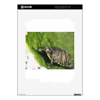 Aquatic turtle getting out of water decal for iPad 2