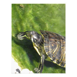 Aquatic turtle getting out of water letterhead