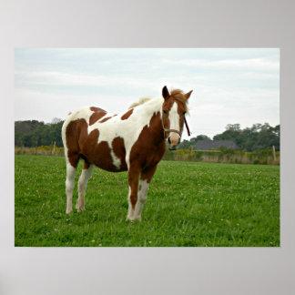 Aquebogue Painted Horse Poster