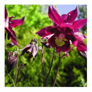 Aquilegia. Flores de la púrpura del ciruelo Escultura Fotografica