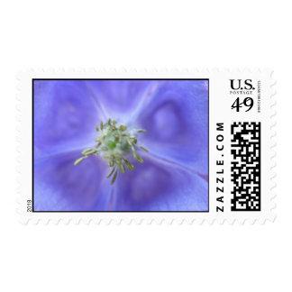 Aquilegia Flower Postage Stamp