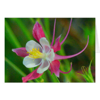 """Aquilegia Flower /WHITE, PINK AND YELLOW"""" Card"""