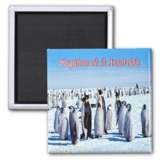 AR - Argentina - Penguins in Antarctica 2 Inch Square Magnet