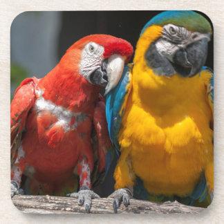 ara ararauna parrot on its perch beverage coaster