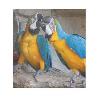 ara ararauna parrot on its perch note pad