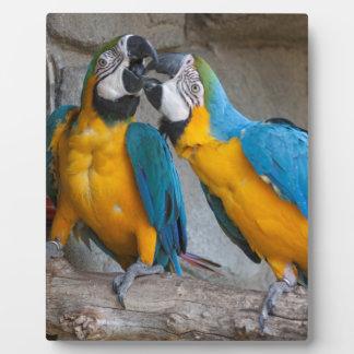 ara ararauna parrot on its perch display plaques
