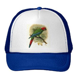 Ara Erythrocephala Trucker Hat