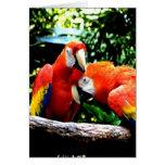 Ara macao kiss love joy cards