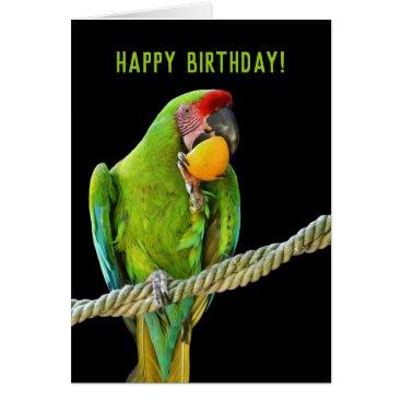 Ara Militaris Green Parrot