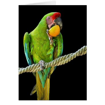 Ara Militaris Green Parrot Card