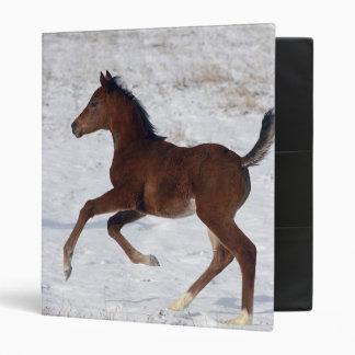 Arab Foal in the Snow 3 Ring Binder