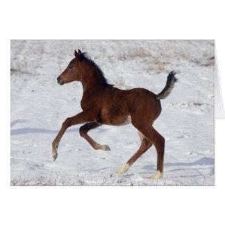 Arab Foal in the Snow Greeting Card