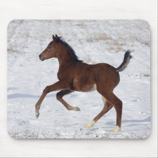 Arab Foal in the Snow Mouse Pad