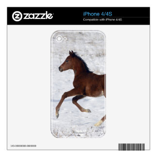 Arab Foal in the Snow Skins For The iPhone 4S