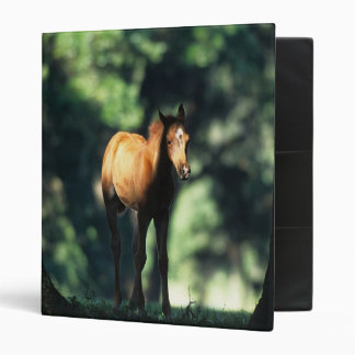 Arab Foal in the Trees Binder