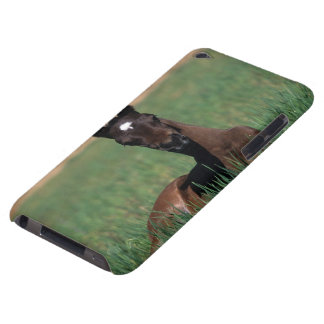 Arab Foal Laying Down iPod Case-Mate Case