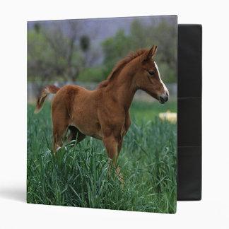 Arab Foal Standing 3 Ring Binder