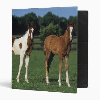 Arab Foals Standing in Grassy Field Binder
