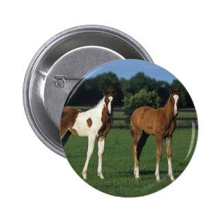Arab Foals Standing in Grassy Field Button
