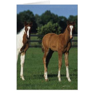 Arab Foals Standing in Grassy Field Card