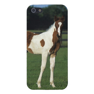 Arab Foals Standing in Grassy Field Case For iPhone SE/5/5s