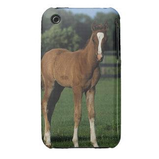 Arab Foals Standing in Grassy Field Case-Mate iPhone 3 Case