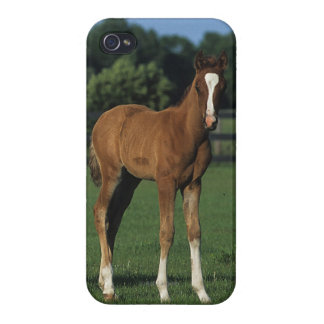 Arab Foals Standing in Grassy Field Cases For iPhone 4