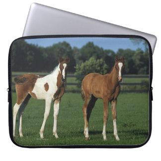 Arab Foals Standing in Grassy Field Computer Sleeve