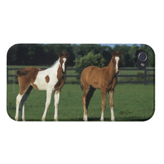 Arab Foals Standing in Grassy Field Cover For iPhone 4