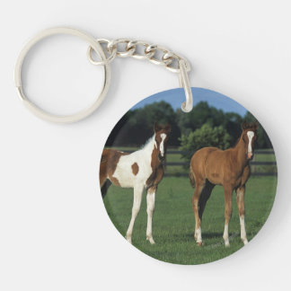 Arab Foals Standing in Grassy Field Double-Sided Round Acrylic Keychain