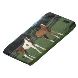 Arab Foals Standing in Grassy Field Droid RAZR Case