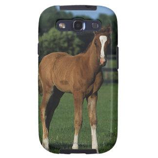 Arab Foals Standing in Grassy Field Galaxy SIII Case