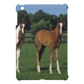 Arab Foals Standing in Grassy Field iPad Mini Cases