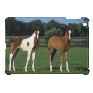 Arab Foals Standing in Grassy Field iPad Mini Cover