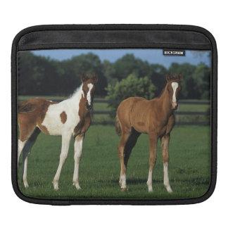 Arab Foals Standing in Grassy Field iPad Sleeve