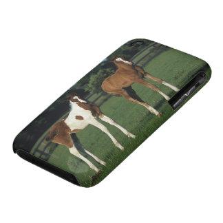 Arab Foals Standing in Grassy Field iPhone 3 Case