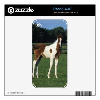 Arab Foals Standing in Grassy Field iPhone 4 Decals