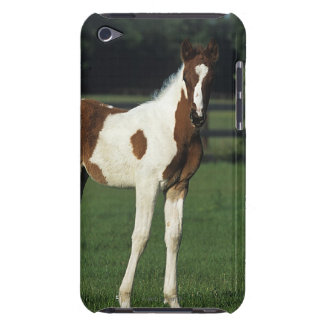 Arab Foals Standing in Grassy Field iPod Case-Mate Case