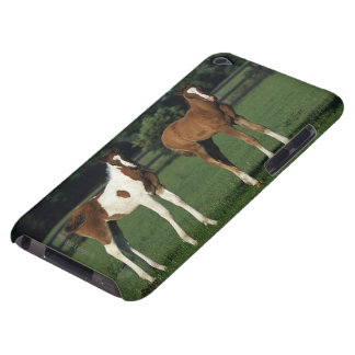 Arab Foals Standing in Grassy Field iPod Touch Case-Mate Case